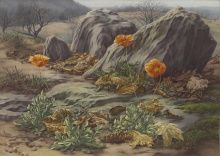 Peter Blume, Landscape with Poppies, 1939, oil on canvas, 18 x 25 1/8 in.