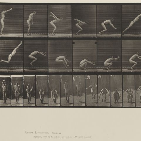 Animal Locomotion, Volume V, Men (Pelvis Cloth). Plate 163 Eadweard Muybridge, 1887
