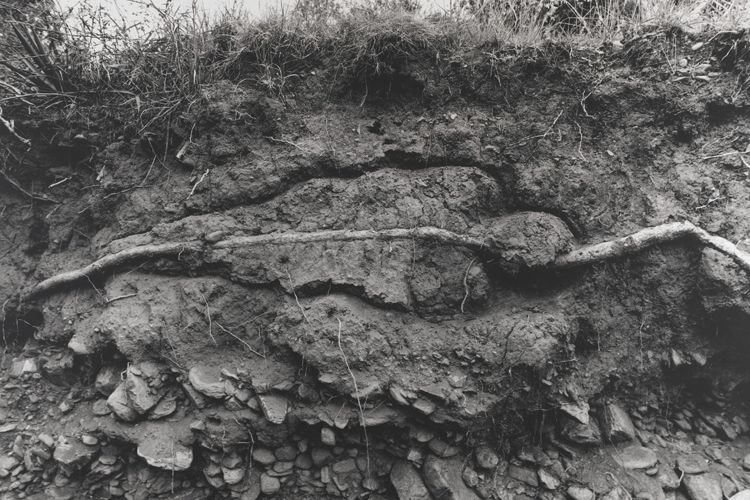 Ana Mendieta, Untitled (from the Silueta series), 1980 Gelatin silver emulsion print; 39 1/2 x 53 1/4 inches PAFA, Art by Women Collection, Gift of Linda Lee Alter © The Estate of Ana Mendieta Collection courtesy Galerie Lelong, New York